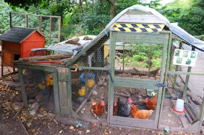 Mental health charity launches funding effort for new home for its chickens