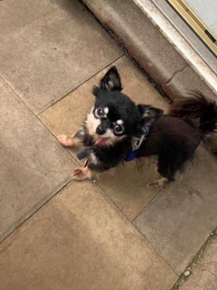 LOST DOG: Bobby, 11, was snatched during an attack