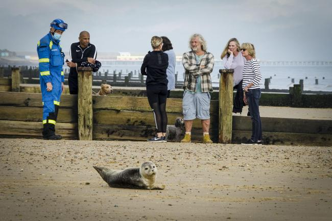 Adorable seaside seal laps up the attention  - Picture: Keith Spears