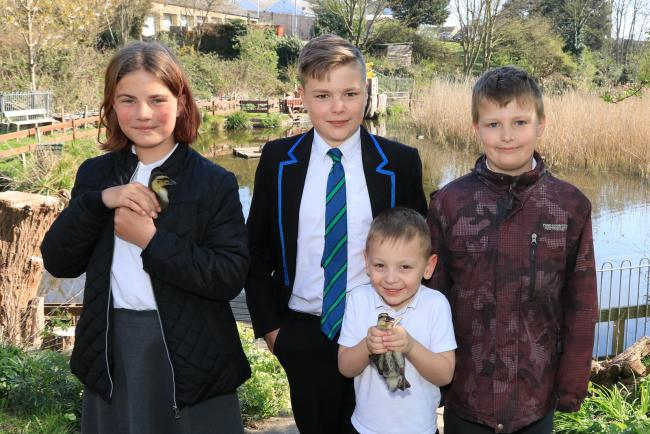 PICTURED L-R: With ducklings 'Wispa' and 'Bolt' - Evie Harding-Double, (Age 11, Harwich Community Primary School) Harrison Rumsby (Age 14, Harwich & Dovercourt High School), Jasper Lord (Age 5, Chase Lane Primary School). Picture: Maria Fowler