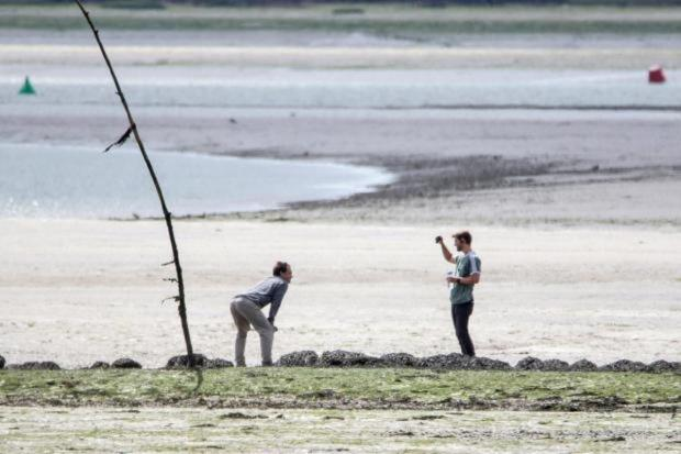 Clacton and Frinton Gazette: Jude Law spotted on Osea Island