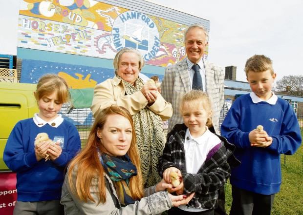 Clacton and Frinton Gazette: Chicks hatched at school after £1k donation