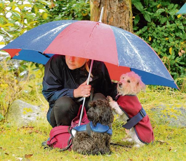 Flower and dog show hailed a success despite downpour