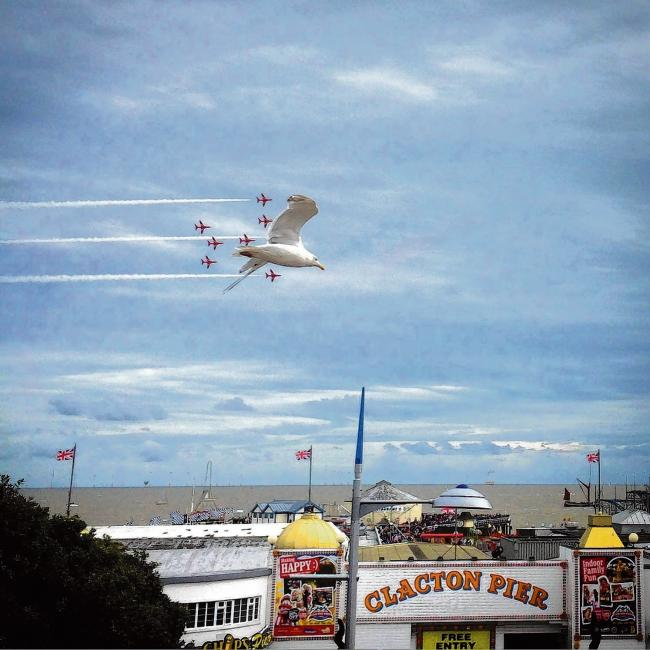 Once-in-a-lifetime shot of seagull photobombing Red Arrows display captured in Clacton