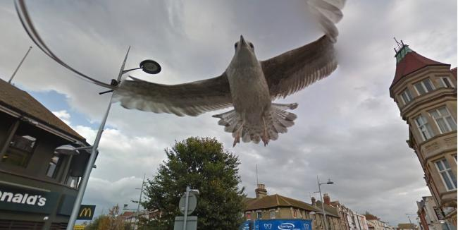Camera-loving seagull photobombs Google's Streetview in Clacton