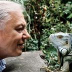 Clacton and Frinton Gazette: Sir David Attenborough at 90: 11 of his best moments to remember