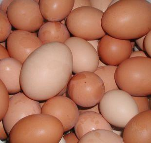 Clacton and Frinton Gazette: Shopkeepers ban youngsters from buying eggs