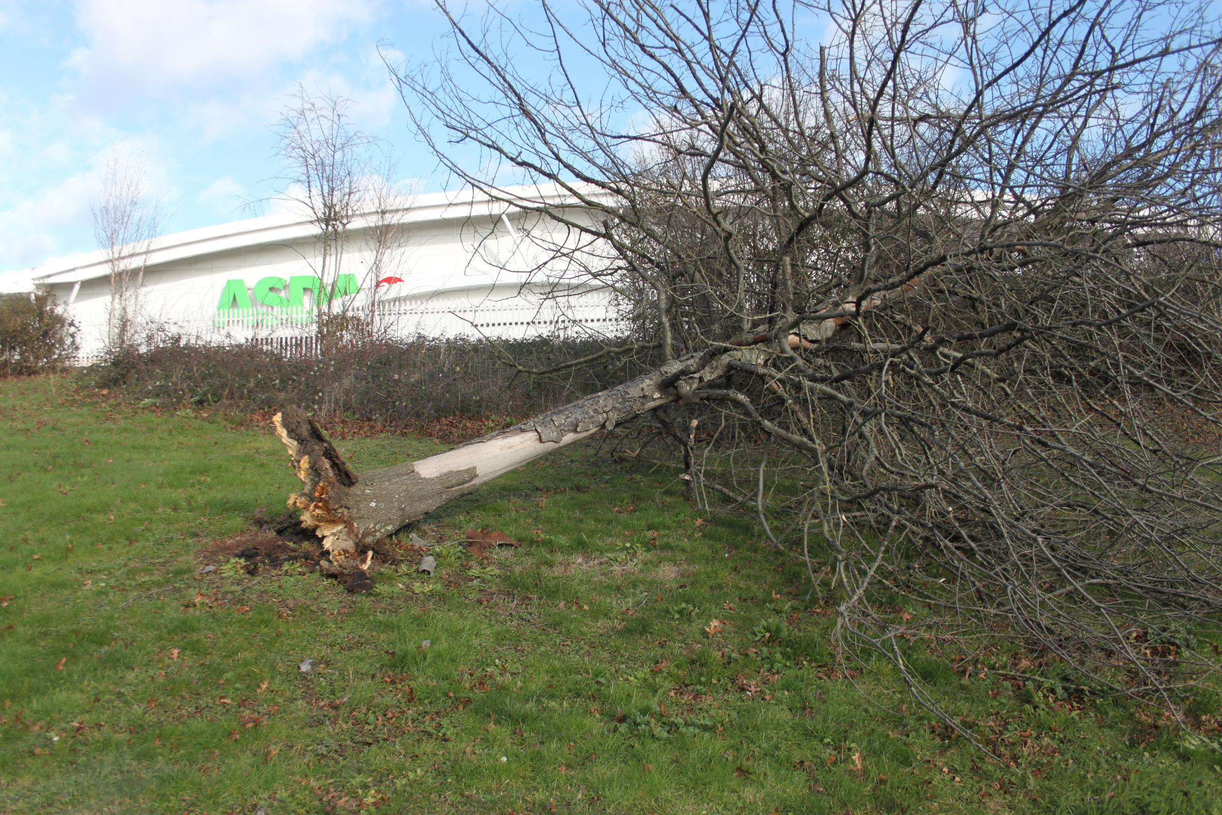 A tree blown over near Asda, in Turner Rise